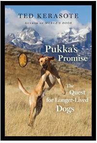 pukkas_promise_cov